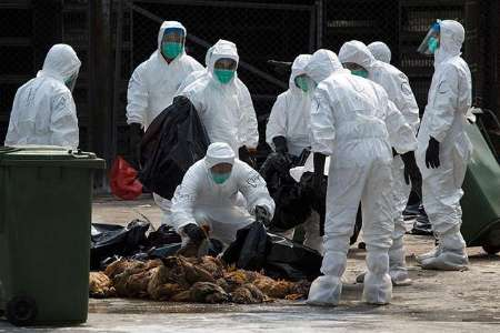 معدوم سازی بیش از یک میلیون پرنده در ژاپن به دلیل آنفلوآنزا