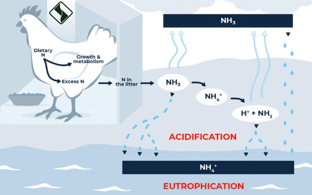 کاهش نیتروژن جیره می تواند تعادل نیتروژن را بهبود بخشد