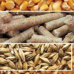 چین دستورالعمل هایی را برای تغییر دستور العمل های خوراک دام صادر کرد