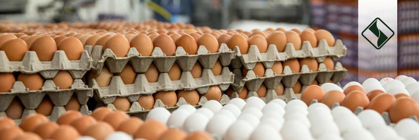 بتائین به رفع کمبود تولید تخم مرغ در تابستان کمک می کند